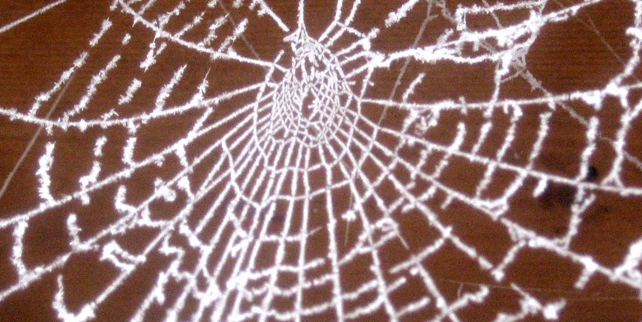 Spinnen im Netz?